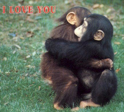 monkeys images monkey hug!!!! wallpaper and background