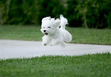 sf puppy prep puppy clinics one day seminars to tune your puppy s behavior sf puppy prep