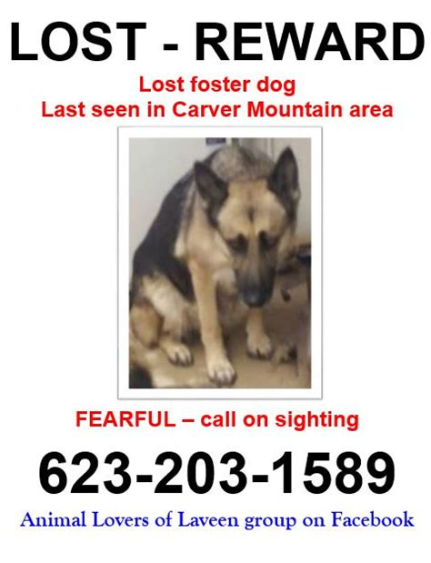 lost dogs arizona lost missing german shepherd laveen az usa 85339 on february 08 2015