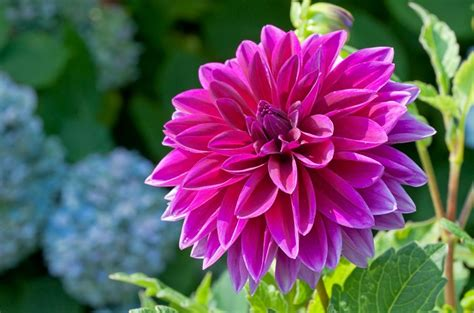 summer flowers the most popular blooms for every month top 10 pretty flowers to plant this summer top inspired