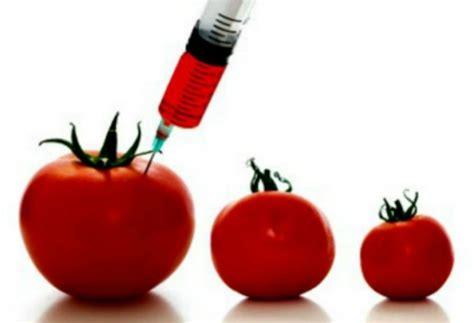 definicion de alimentos transgenicos resuelve tus dudas sobre los alimentos transg 233 nicos