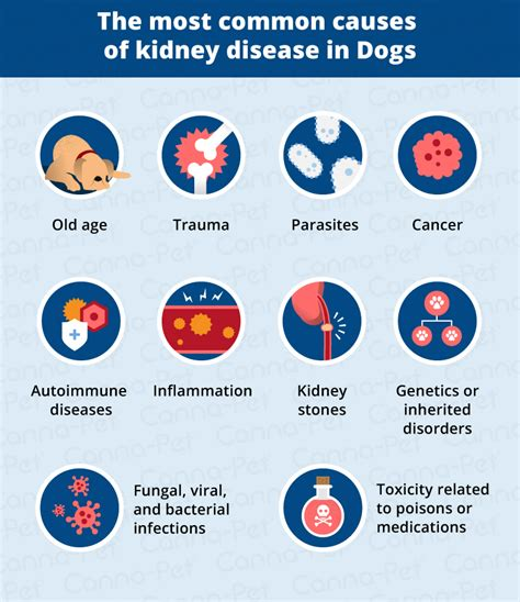 signs of kidney disease in dogs kidney failure in dogs signs causes canna pet 174