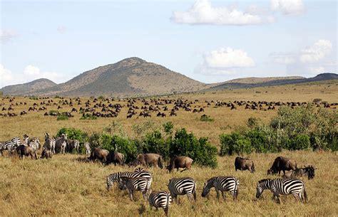 kenya safari  day masai mara migration  group joining safari