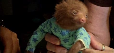 Cheap Cute Home Decor by Baby Sloth In Pjs