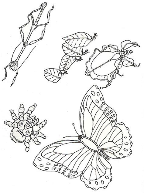 beautiful insects coloring page with insects coloring pages
