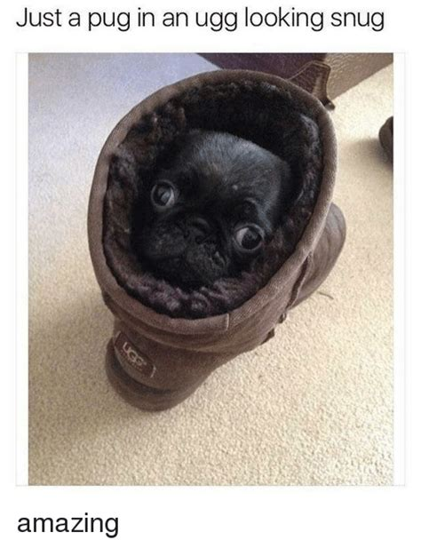 pug in an ugg 25 best memes about pug in an ugg pug in an ugg memes