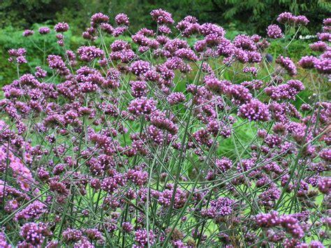 Hotpants Bordir Bunga per un giardino perfetto juliandjuliette