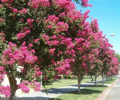 alberi da giardino fioriti mammeonline leggi argomento quot cambiare quot gli alberi