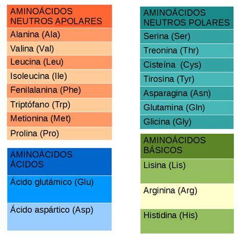 clasificacion de los aminoacidos segun sus cadenas laterales la mitocondria