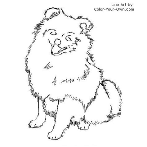 pomeranian dog coloring page