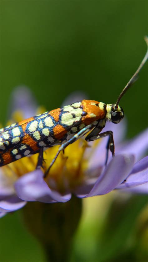 wallpaper moth butterfly flower insects macro