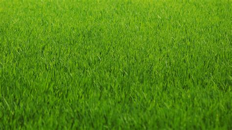 whatsapp wallpaper grass beautiful green hd wallpapers in 1366x768 2 jpg gujarat