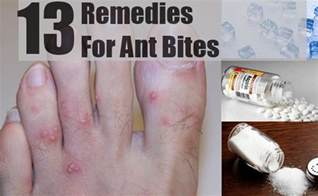 home ant remedy 13 home remedies for ant bites treatments cure
