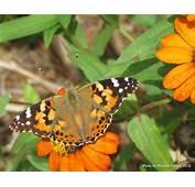 Butterfly Gardening – Dig It