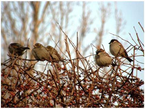 wild birds unlimited specific bird flock group names