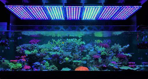 beleuchtung aquarium 20 bilder aquarium beleuchtung led egyptaz
