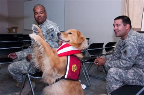 ptsd therapy dogs therapy dogs many uses animal assisted therapy