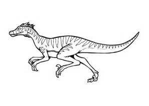 velociraptor coloring page velociraptor color pages dinosaurs