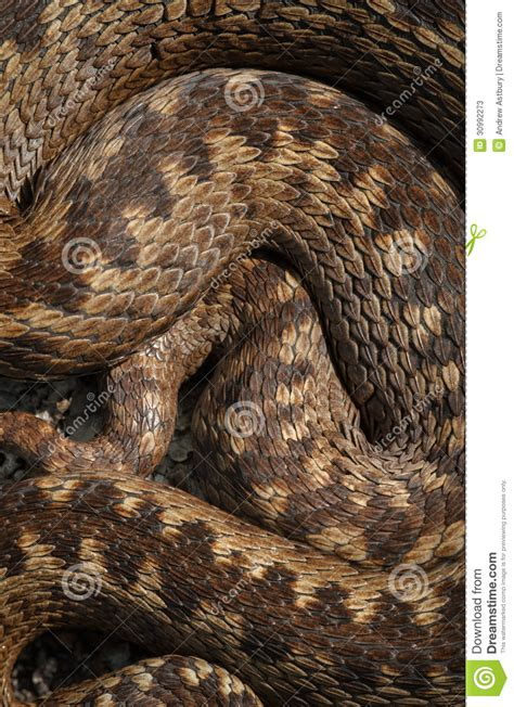 with snake scales stock image image of human design 31920181 snake scales stock image image of fashion structure 30992273