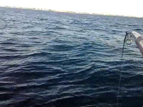 pesca allo sgombro porto garibaldi pesca allo sgombro sei funnydog tv