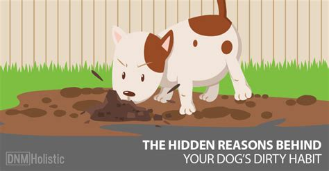 why dogs eat dirt 5 reasons dogs eat dirt dogs naturally magazine