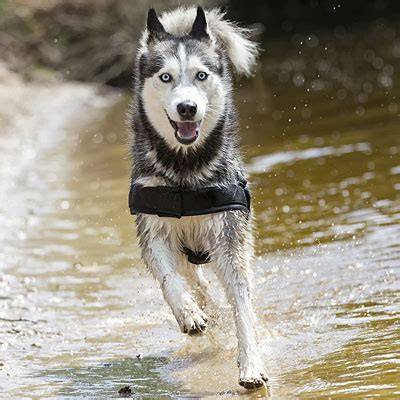 dogs  runners  active people health