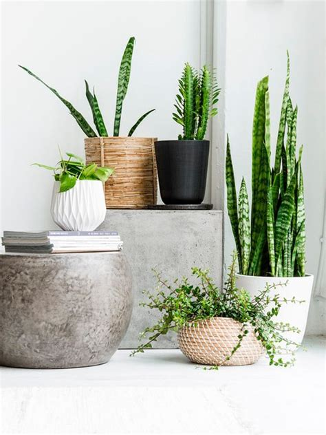 in door plants pot three four plants argements video plant in mand interieur inrichting