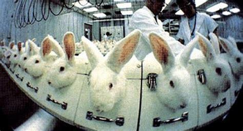 test sugli animali sperimentazione e ricerca animalisti contro telethon