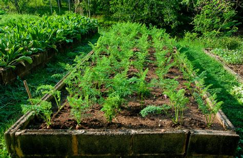 Vegetable Crops For Narrow Beds And Wide Rows Harvest To Raised Rows Vegetable Garden