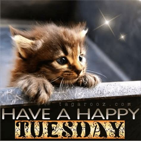 tuesday meme happy tuesday memes images and tuesday motivational quotes