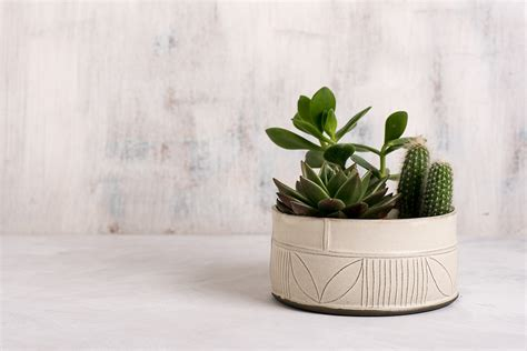 Pottery Planters by White Ceramic Succulent Planter Modern Ceramic Planter