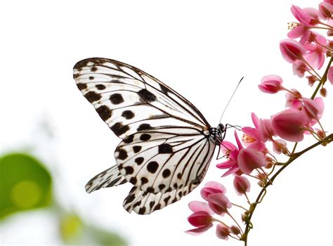 What Do Different Colors Mean by Butterfly Facts