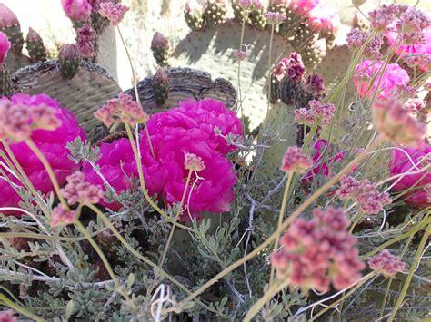 Olive Magenta Flower desert colors olive magenta and pink by