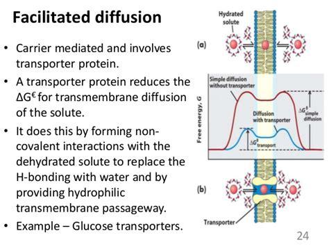 cell membrane  transport