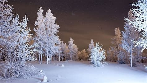 wallpapers  winter forest snow laptop