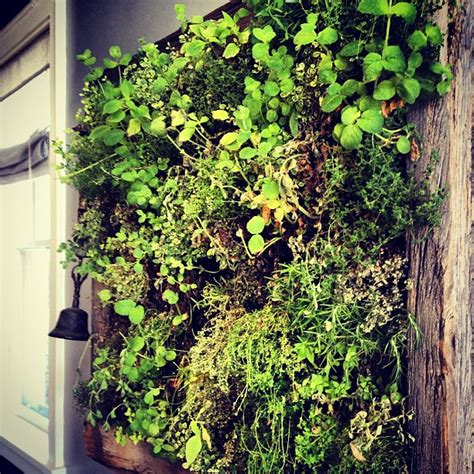 Herbs On Wall | herb wall 28 images tips for growing edible wall of