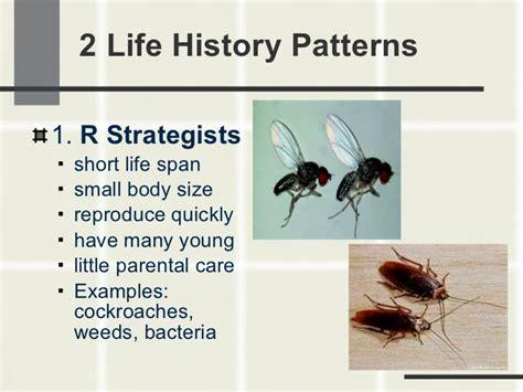 life history pattern exle population ecology 2011