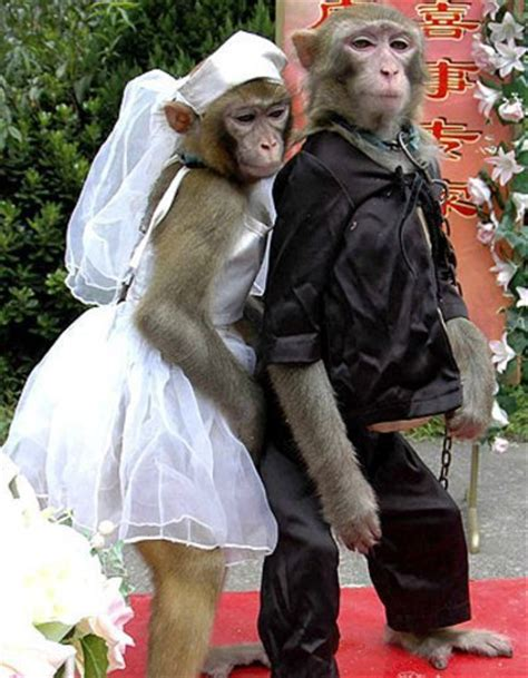 7 Strange Couples by Animals Couples New Best Images Photos 2012