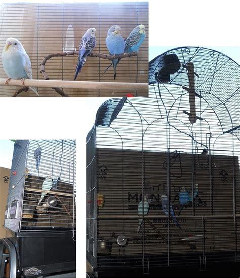 la gabbia forum gabbia nuova cocorite e pappagallini ondulati