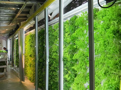 grow kale inside shipping containers with this