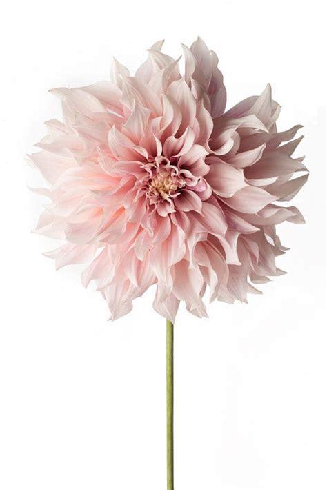 types  wedding flowers flowers