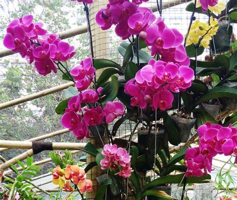 air ac penyegar tanaman hias bebejacom