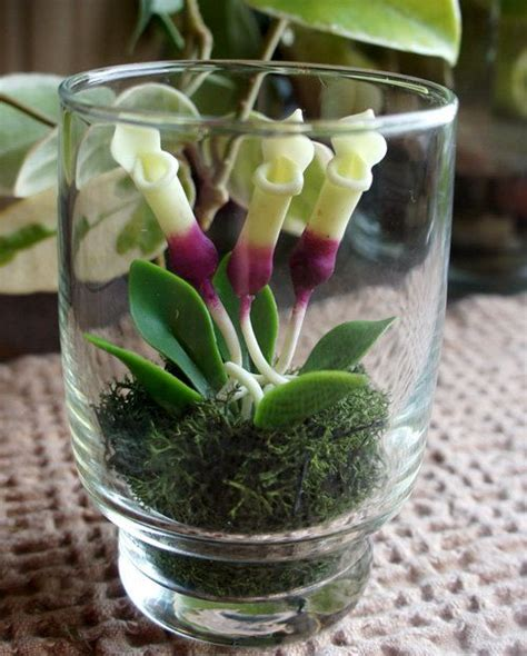 tiny plants mini terrarium carnivorous pitcher plant in recycled glass