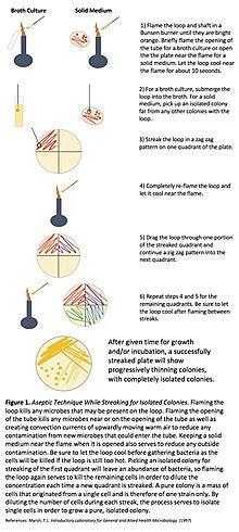 streaking (microbiology) wikipedia