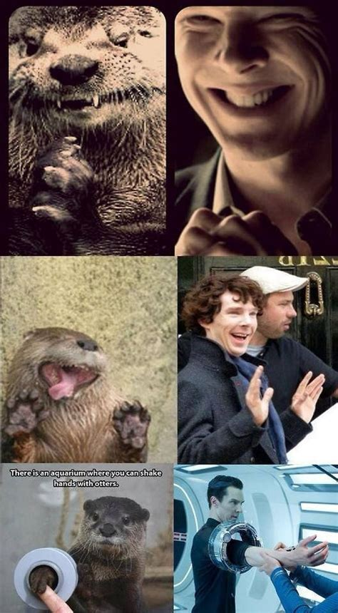 Cumberbatch Otter Meme - 14 best images about benedict otter on pinterest i need dis my email and otter meme