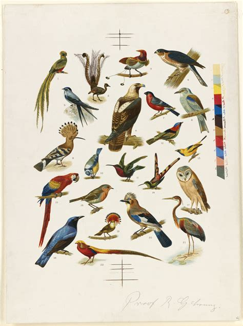 file 22 species of birds boston public library jpg