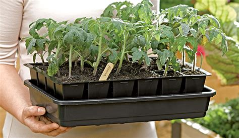 four hardest vegetables to grow from seed buy transplants how to start seeds germinating seeds gardener s supply