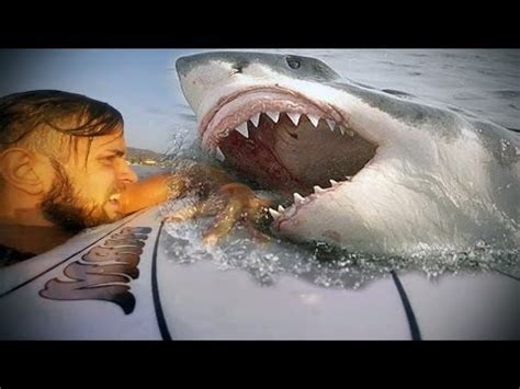 caught on tape 2017 shark attack on camera great white