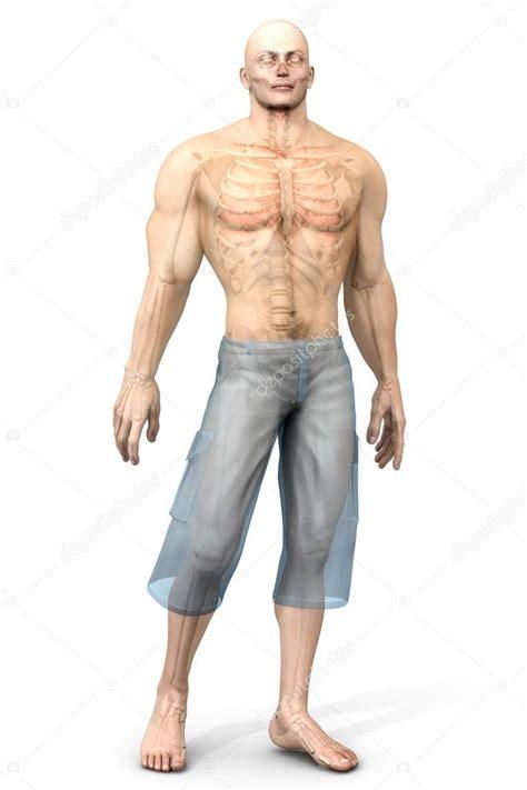 corpo umano anatomia organi interni umano anatomia di visualizzazione organi interni foto