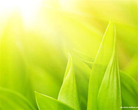soft green fresh green soft hazy green leaves 1280x1024